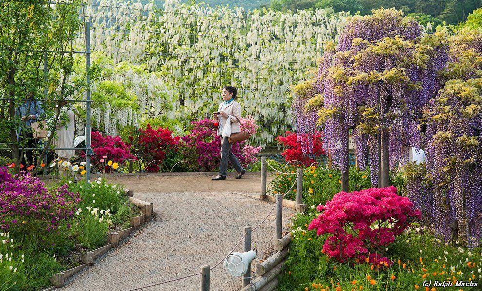 ashikaga_flower_park_014