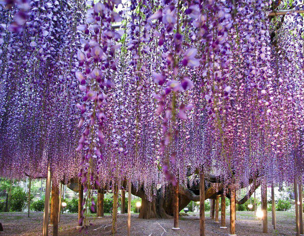 ashikaga_flower_park_015