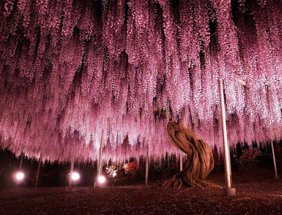 ashikaga_flower_park_016