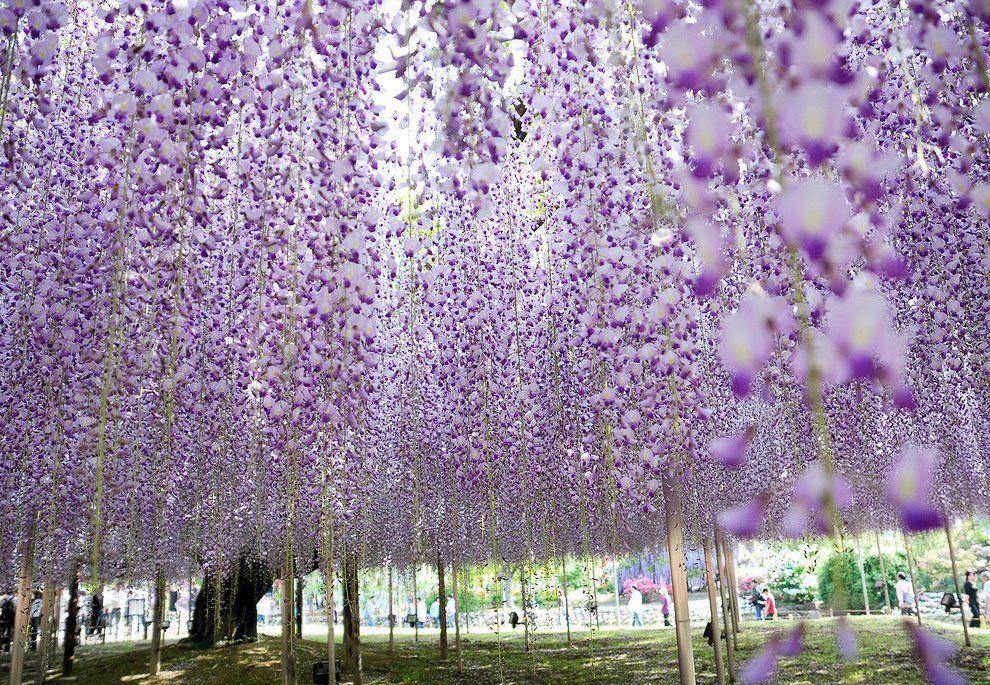 ashikaga_flower_park_017