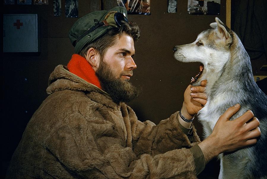 Мужчина рассматривает зубы 10-месячного щенка породы аляскинский маламут, Южный полюс, 1957