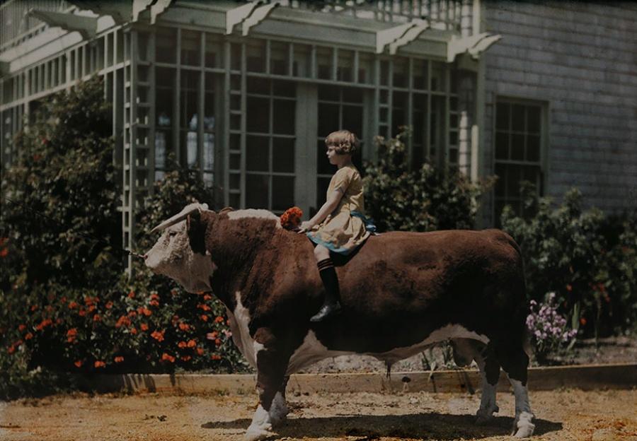Ребенок сидит верхом на быке рядом с городом Плезантон, США, 1926