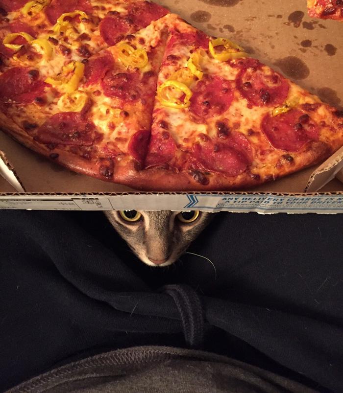 Сначала Уилбур был обычным бездомным котом которого приютили
