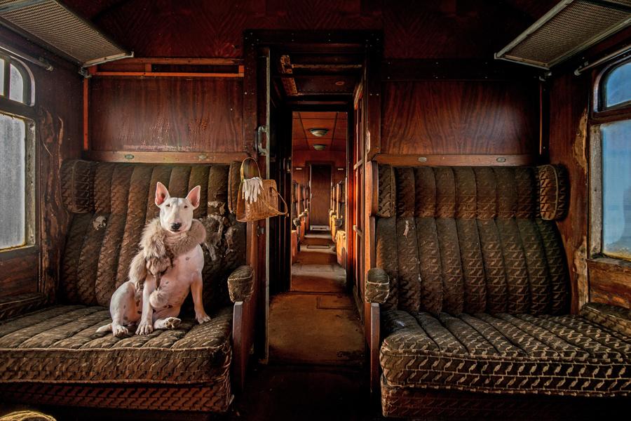 """Победитель в номинации выбор читателей: """"Восточный Экспресс"""", бультерьер Клэр фотографируется в заброшенном поезде. Фото: Alice van Kempen."""
