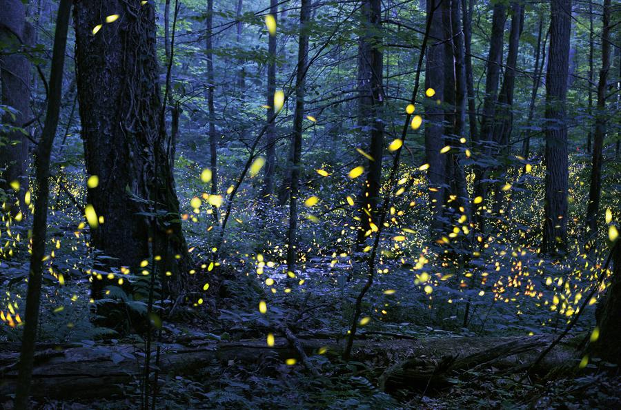 Номинация «Измененные изображения»: Тьма светлячков. Фото: Radim Schreiber.