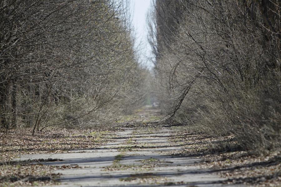 Вид на аллею в Припяти, недалеко от Чернобыльской АЭС, 23 апреля 2013 года.