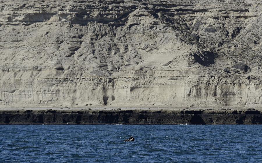 Пуэрто Пирамидес на полуострове Вальдес, в Патагонской провинции Чубут, Аргентина, 29 сентября 2015 года. Тысячи южных китов приплывают на полуостров Вальдес каждый год, чтобы завершить свой репродуктивный цикл.