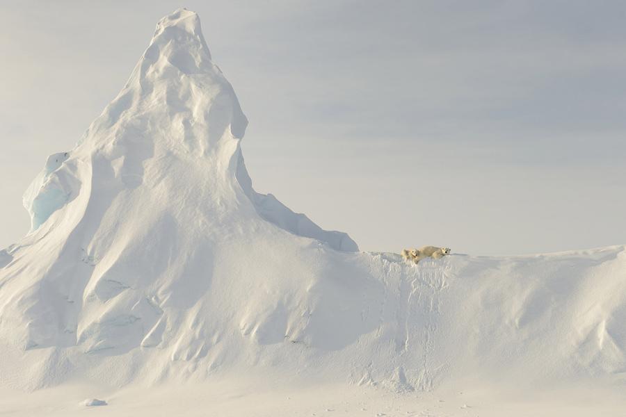 Белый медведь на айсберге.