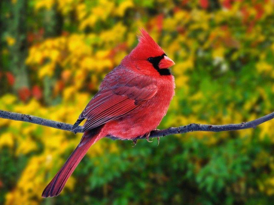Самый красивый птица мире
