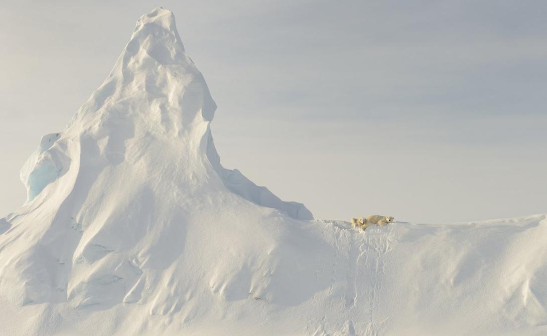 Белая медведица и ее детеныш отдыхают на айсберге вблизи острова Баффина.