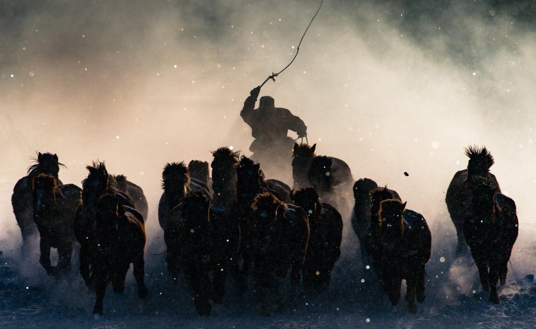 Монгольский погонщик управляет стадом лошадей. Этот снимок получил главный приз.