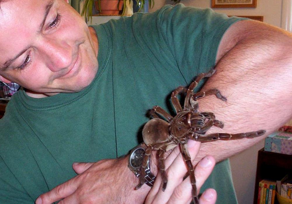 Огромный тарантул