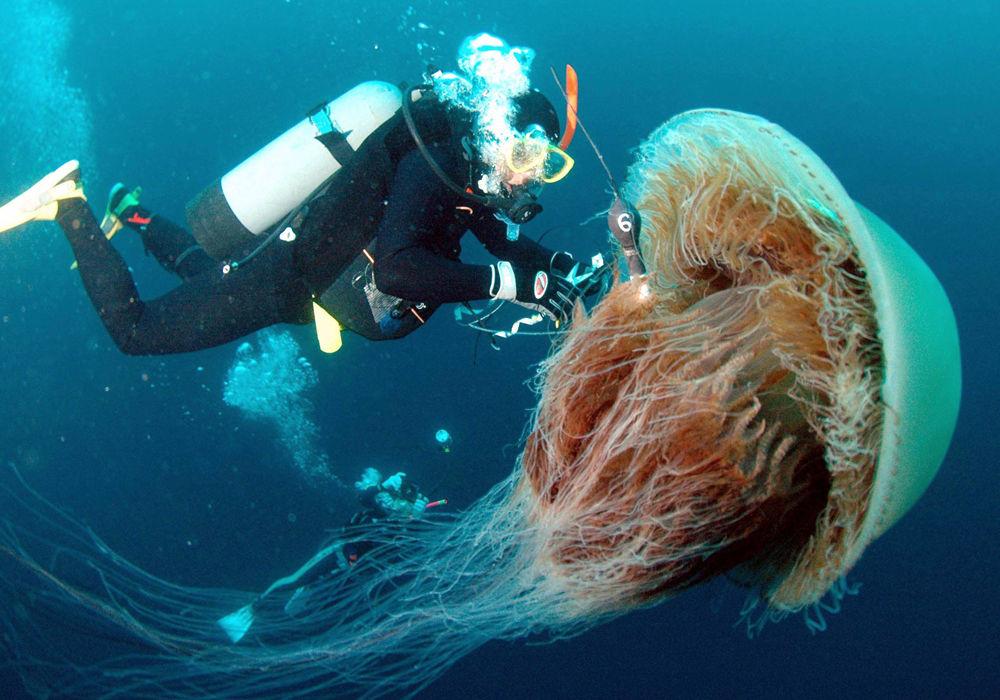 Здоровая медуза