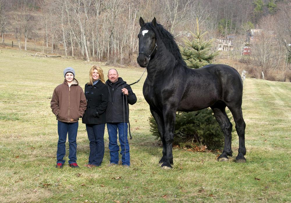 Лошадь породы першерон