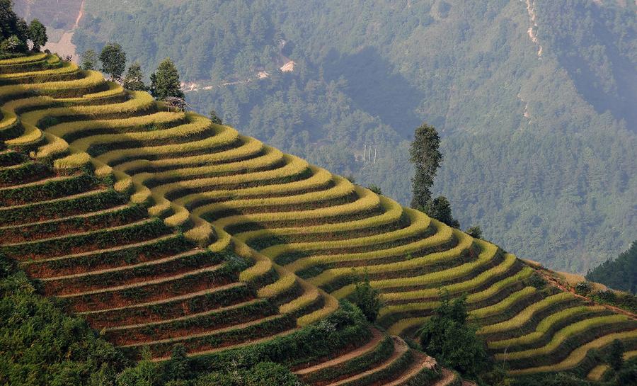 Рисовые поля в горном районе Му Cang Chai, в северо - западной вьетнамской провинции Йенбай.