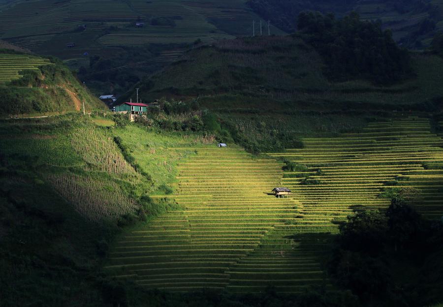 Солнце освещает рисовые террасы в Mu Cang Chai, Йенбай, Вьетнам.
