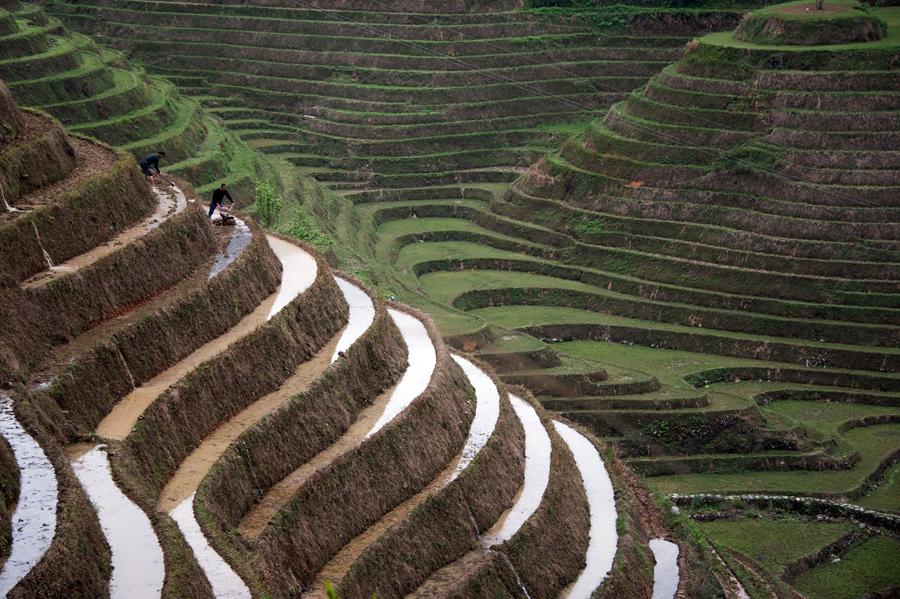 Два фермеры работают в террасе рисовых полей близ села Tiantou в Лонгшенге округа, в южной части Китая.