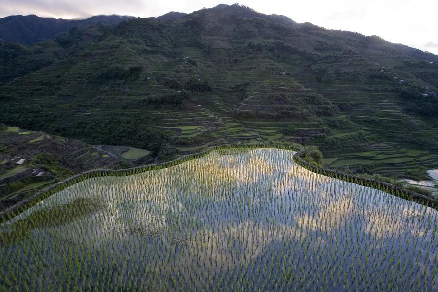 Вид на рисовые поля вдоль горных склонов города Банауэ, провинции Ифугао, к северу от Манилы.