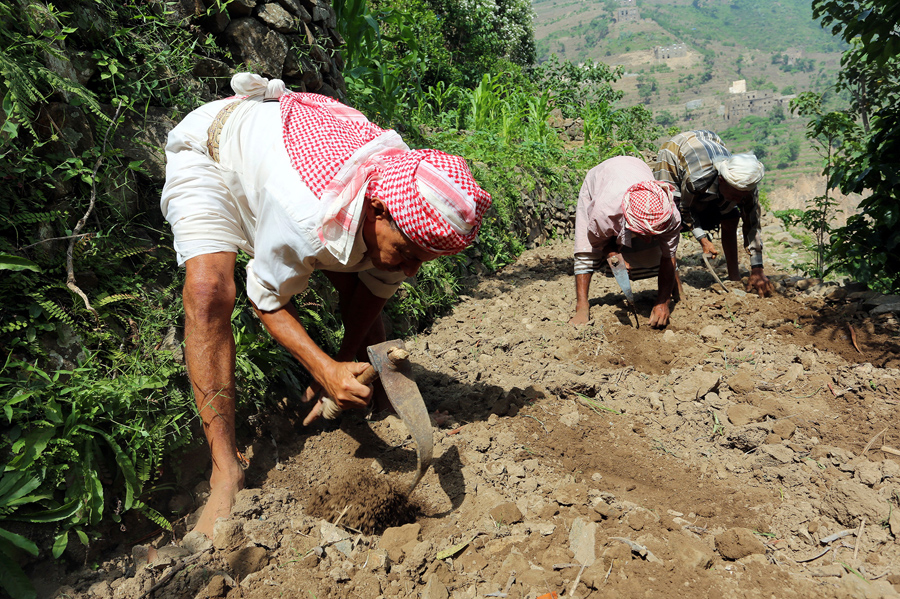 Мужчины работают на ферме, 21 мая 2016 года.