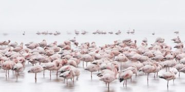 national_geographic_september_2016_12