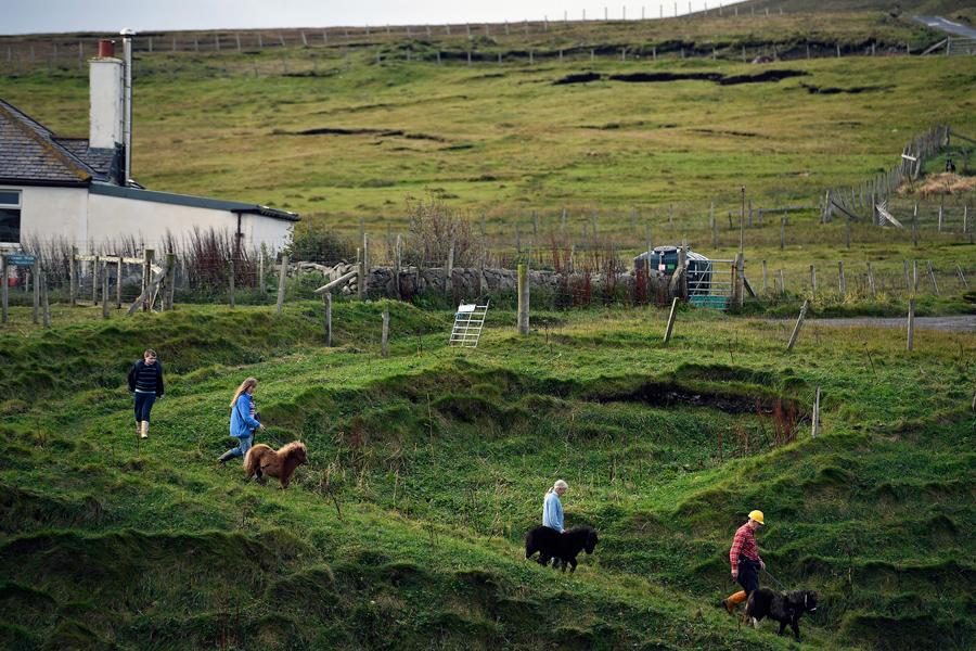Джек, Пенни, Шейла и Джим ведут пони на паром, где их доставят рынок в  Шотландии, 1 октября 2016 год.
