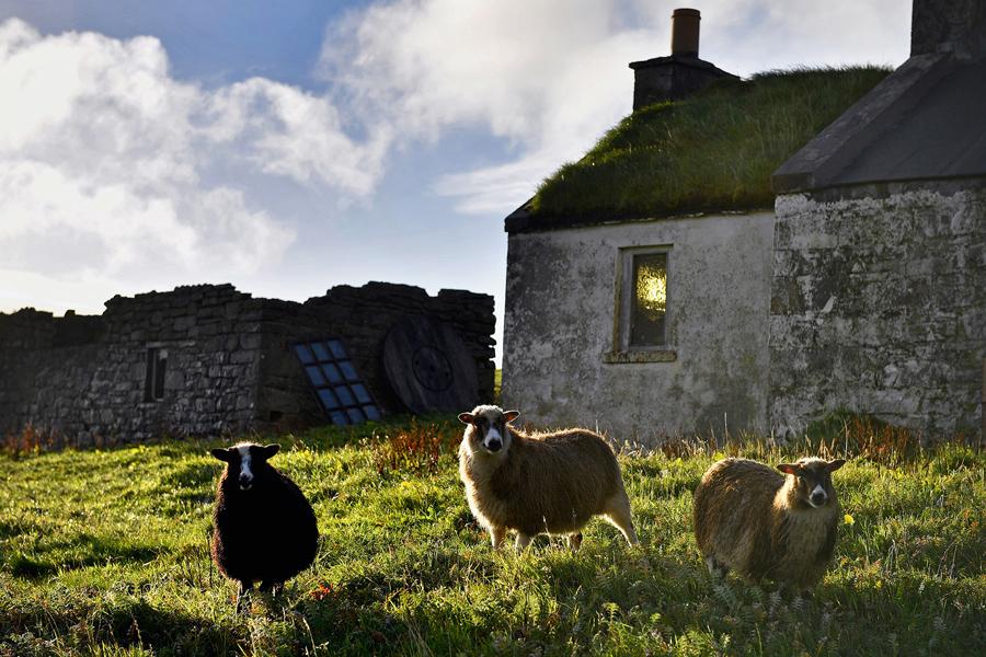 Овцы пасутся возле старого домика, 29 сентября 2016 года.
