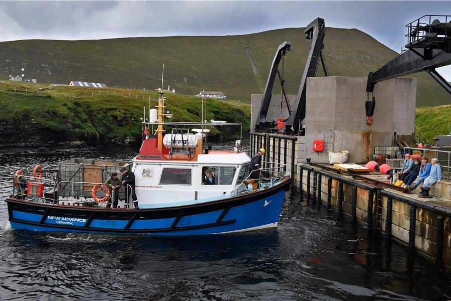 Лодка покидает гавань, она везет пони для продажи на рынке в Шотландии, 1 октября 2016 года.