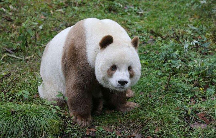 panda_25698_02