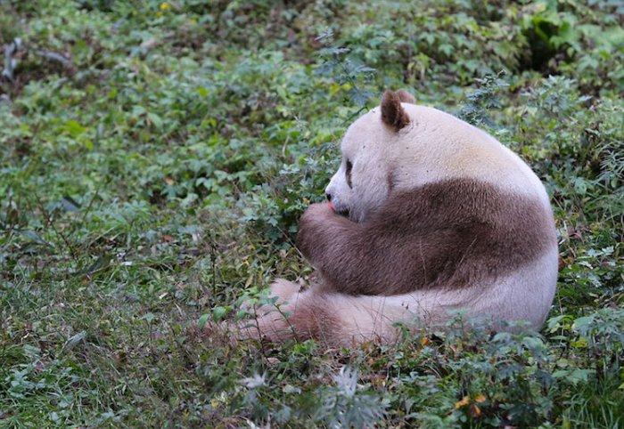 panda_25698_09