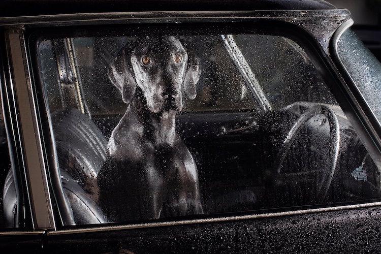 dog_cars_01
