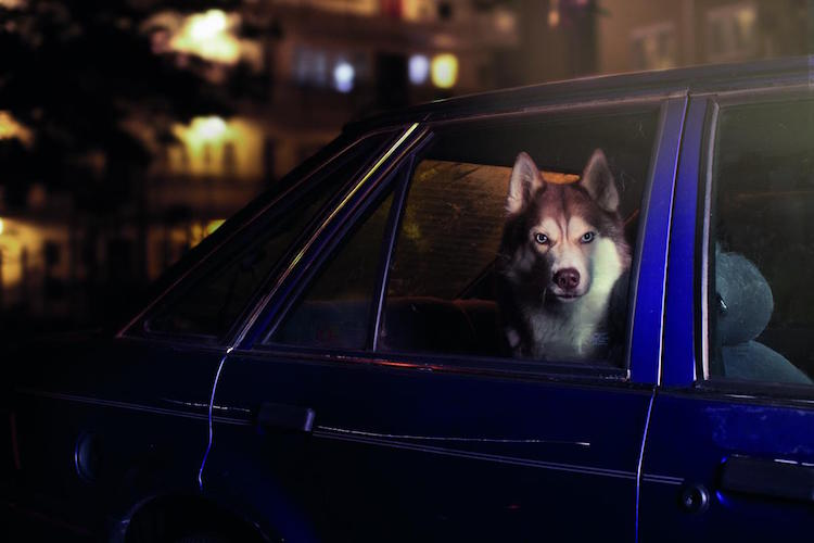 dog_cars_02