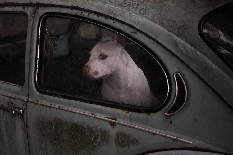 dog_cars_03