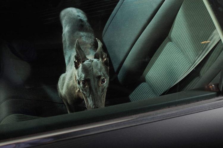 dog_cars_04