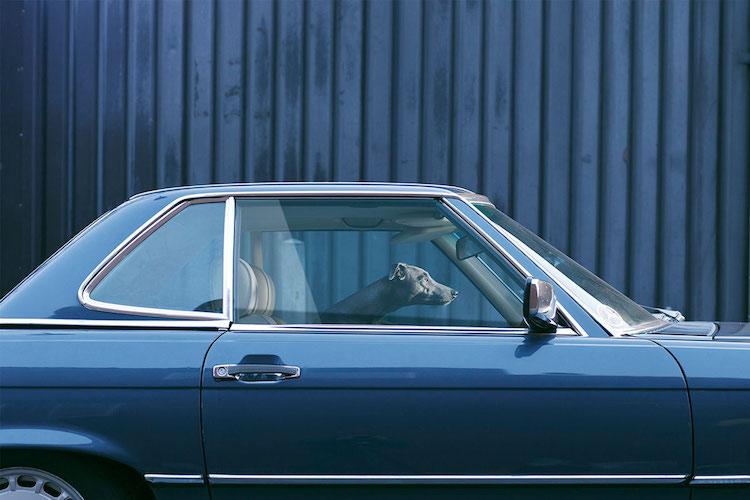 dog_cars_06