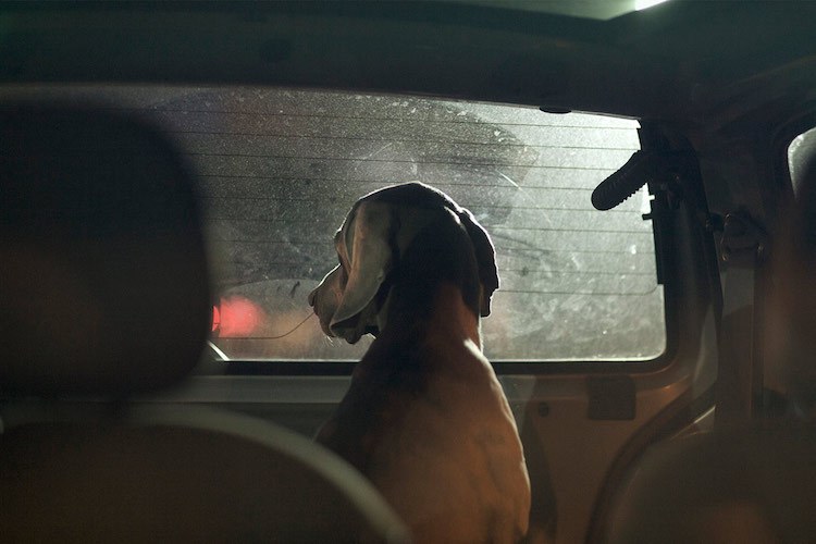 dog_cars_08