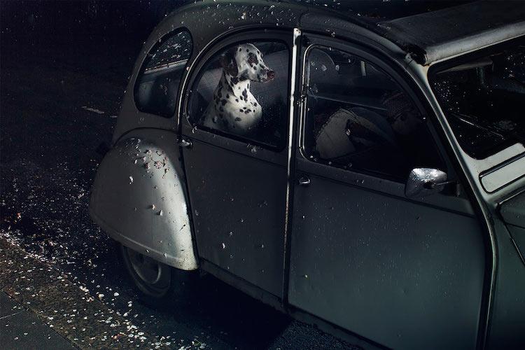 dog_cars_09