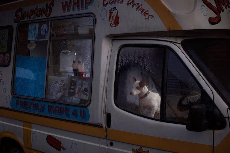 dog_cars_10