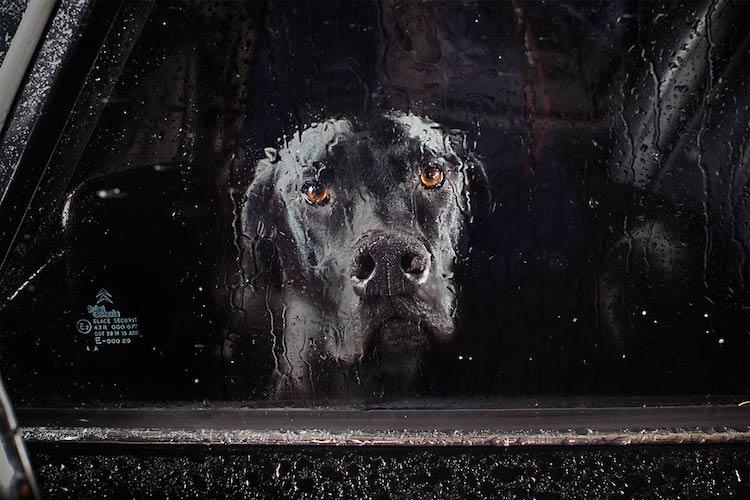 dog_cars_11