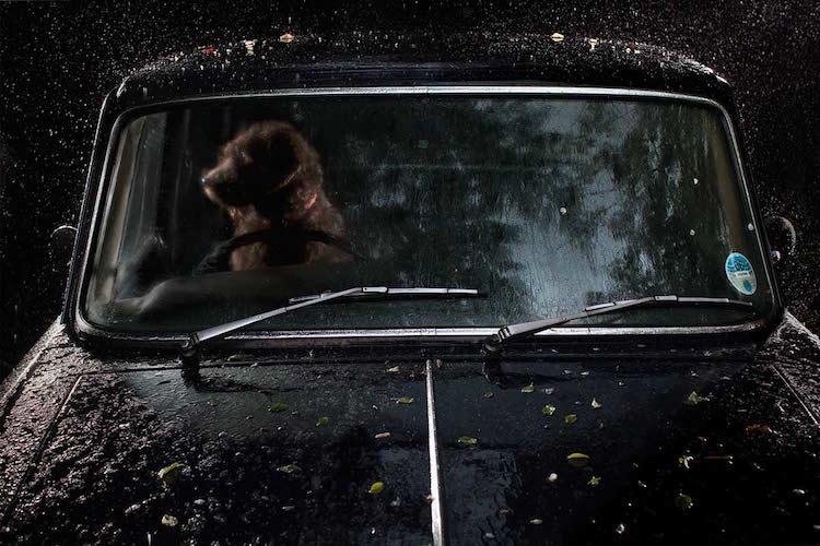 dog_cars_12