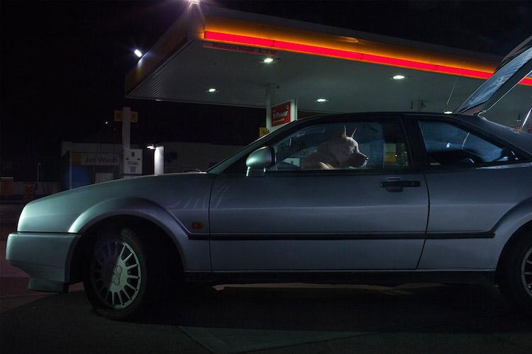 dog_cars_13