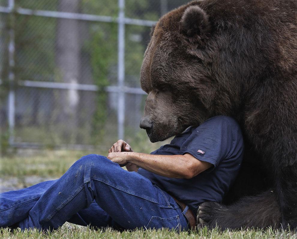 Джим Ковальчук играет с Джимбо, 1500-фунтовым медведем-кадьяком, в Центре диких животных-сирот в Отисвиле, Нью Йорк, 7 сентября 2016 (фото Майка Гролла)
