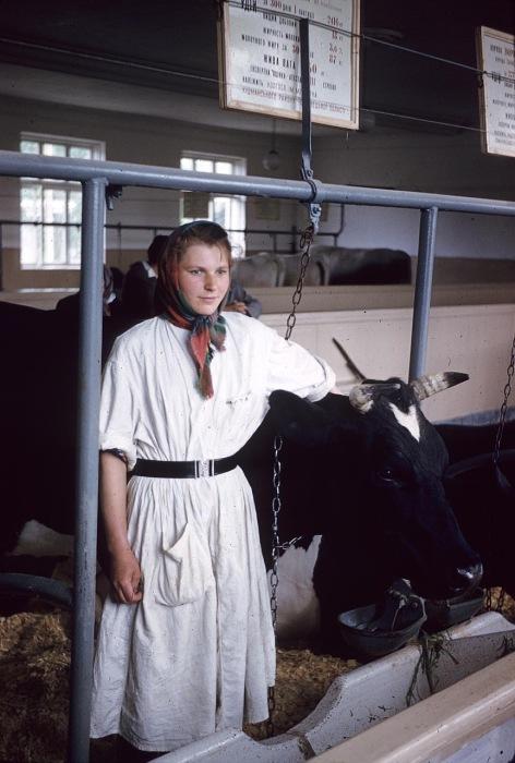 Девушка в Коровнике