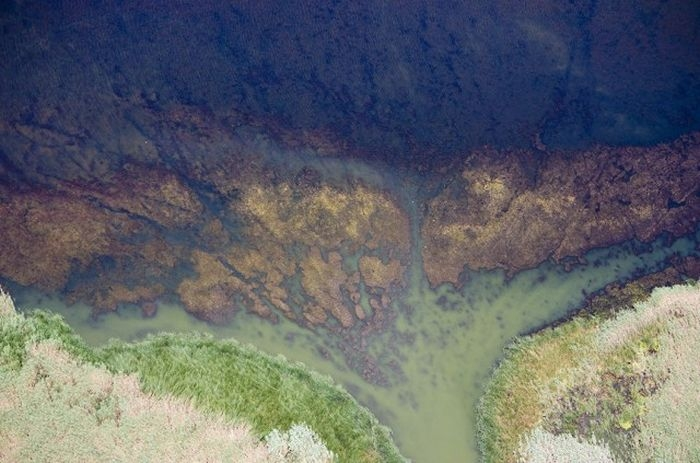 Дельта Азовского моря, Краснодарский край