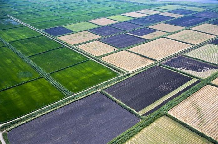 Рисовые поля, Краснодарский край