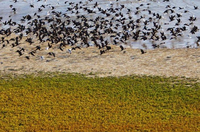 Птицы на берегу озера Маныч-Гудило, Калмыкия