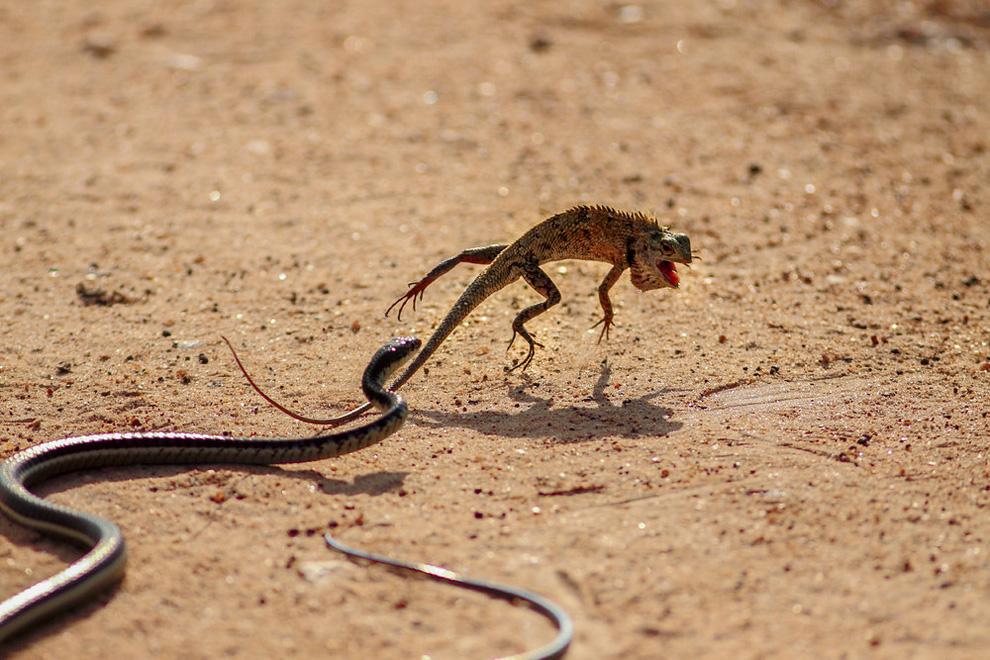 Национальный парк Яла, Шри-Ланка. Категория: Действие.
