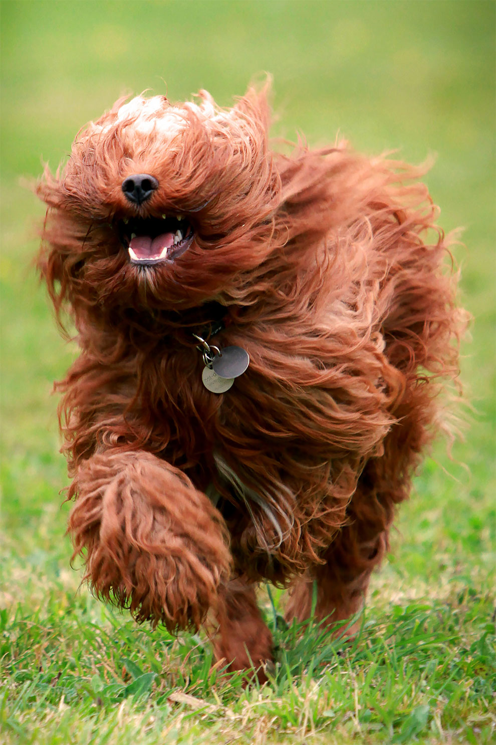 Фотограф успел захватить выражение лица у собак на бегу