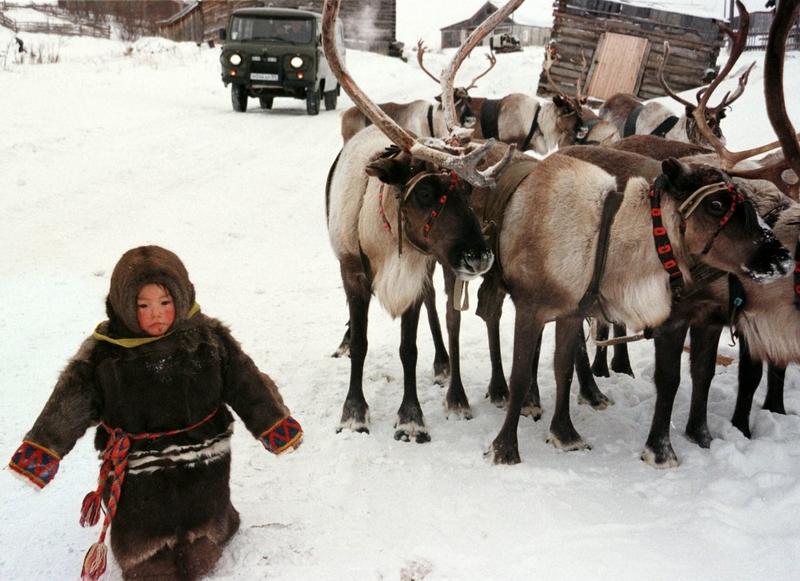 Девочка из народа ханты проходит мимо оленей в минус 30 в селе Аксарка, 2 000 километров от Москвы, 6 ноября 1998 года.
