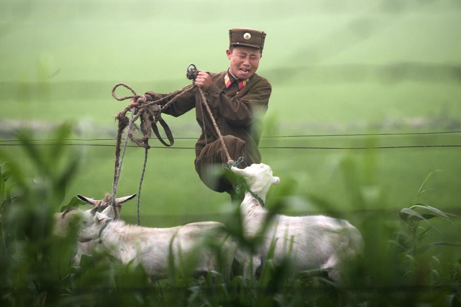Пограничник Северной-Кореи пинает козу на берегу реки Ялу близ северокорейского города Синыйджу, 5 июля 2009 года.