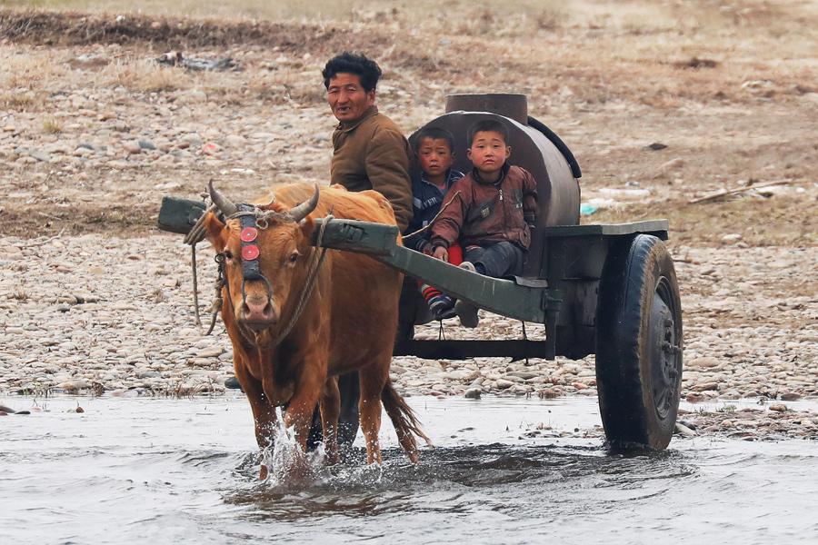 Мужчина с детьми везут воду на воловьей повозке с северокорейской стороны реки Ялу, только к северу от города Синыйджу, Северная Корея, 30 марта 2017 года.